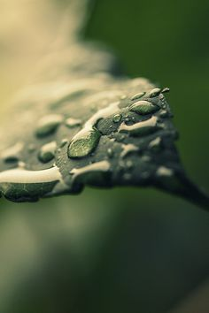 The Element • Water: Oh It's Raining Again - By Victoria Ie. #Rain drops on a leaf. #Nature #Macro