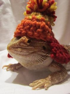 I-make-my-dragon-wear-silly-things Part 2 of a million. Personally, I think Durango looks shiny in his custom knitted Jayne hat.