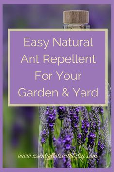 How to get rid of ants naturally with a nontoxic and easy DIY spray. Are you looking for a safe & natural ant repellent? The recipe to make my natural ant spray is easy to make and use around your yard & garden. Using pure doTERRA essential oils! via @eoilswithbetsy