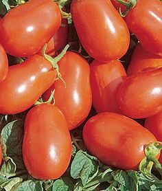 Grow robust tomato plants with Burpee's high yield tomato seeds today. Shop quality beefsteak, cherry, slicing, paste, and heirloom tomato seeds for sale. Find over 100 types of tomato seeds & plants for sale at Burpee. Organic Mulch, Grow Organic, Organic Seeds, Organic Plants, Growing Tomatoes, Dried Tomatoes, Roma Tomatoes, Cherry Tomatoes, Baby Tomatoes
