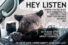 Because when you have a bear in your window, you listen