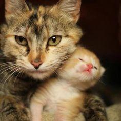 Amor de madre 2