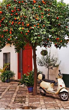 En el Seville, árboles de naranjas esta en el calle. La familia de Marco es típico. La familia había un papa y una mama en la familia y además había tres niños. Los niños se llamaban Carmen Laurita y Pedro.