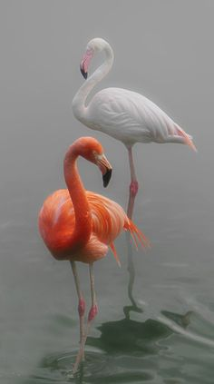 Flamingos by Lena Painter …