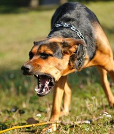 Ever been approached by an angry dog while running? Here's how to stay safe