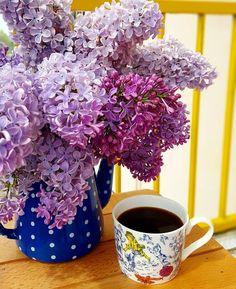 High Tea, Coffee Time, Tea Cups, Bloom, Mugs, Tableware, Flowers, Instagram, Cozy
