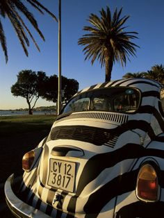 Back of a Beetle Car Painted in Zebra Stripes