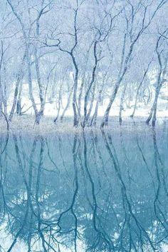 Forest on the mirror- Japan Hokkaido