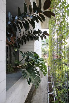 Plants and ponds are incorporated into the roof, walls and terraces of this concrete house in Singapore.