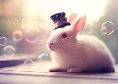 In Wonderland by Ashraful Arefin - Photo 89096501 - 500px