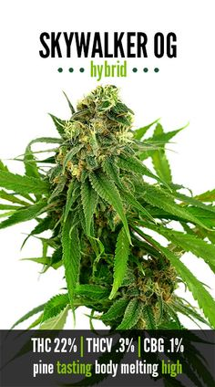The Green Solution - Strains