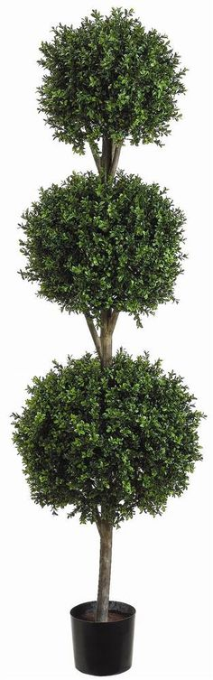 6'+Triple+Ball-Shaped+2+Tone+Boxwood+Topiary+in+Plastic+Pot+Two+Tone
