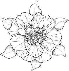 nature :: camelia image by tharens - Photobucket Line Art Flowers, Flower Art, Colorful Drawings, Colorful Pictures, Coloring Book Pages, Digi Stamps, Copics, Embroidery Patterns, Flower Embroidery