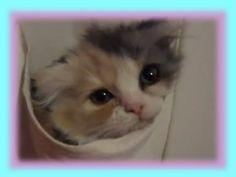 Cutie thinks she's a shoe!   http://YouTube.com/user/CutiesNFuzzies
