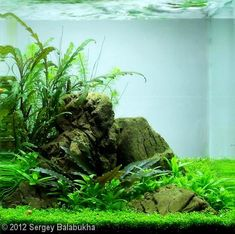 """2012 AGA Aquascaping Contest - Entry #211 """"Valley of tales"""" 5 gallons"""