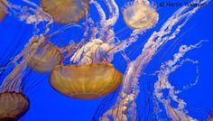 Ocean Conservancy (@OurOcean)   Twitter
