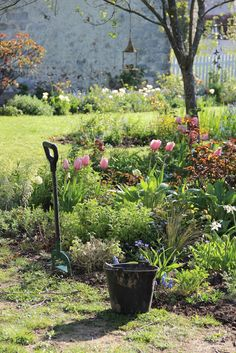 the spring garden at Rose cottages and gardens