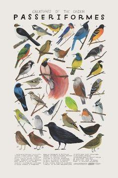 Criaturas+de+la+orden+Passeriformes-vintage+inspiraron+poster