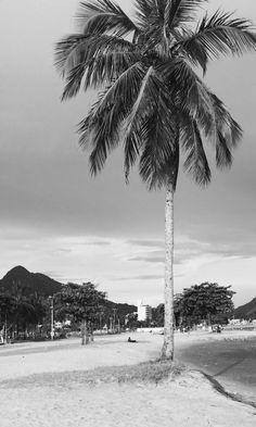 Praia do centro de Caraguatatuba   #Praia #Caraguatatuba #Arvore #BlackAndWhite #PretoEBranco #Natureza