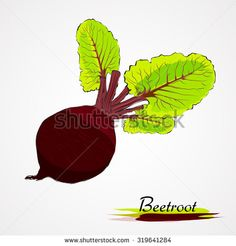Hand drawn vector ripe black beetroot vegetable with leaves on the light background - stock vector