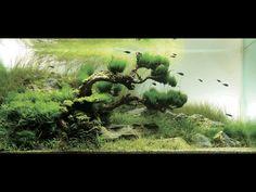 Japanese garden inspired aquarium by Takashi Amano