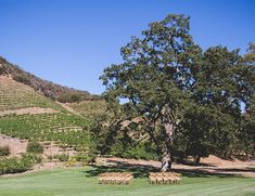 Romantic Glam Wedding at Triunfo Creek Vineyards - Inspired by This