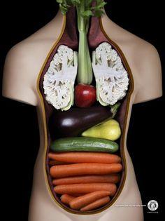 International Vegetarian Union: Anatomy