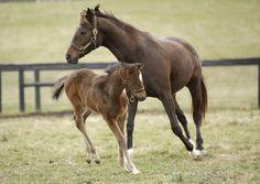 #family #horsephotos