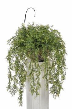 102 besten indoor pflanzen bilder auf pinterest blumen pflanzen gartenpflanzen und pflanzen. Black Bedroom Furniture Sets. Home Design Ideas