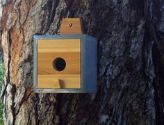Modern Clear Cedar Birdhouse...  $58.00    Etsy