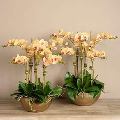 100X World Rare Black Cymbidium Faberi Orchid Flower Plant Seeds Set,^