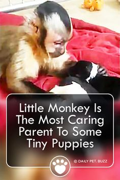 You won't believe it when this monkey sits down with a pile of puppies. This is the most precious thing you will see all week, for sure. White Puppies, Tiny Puppies, Puppy Barking, Pet Puppy, Newborn Puppies, Baby Dogs, Cute Pupies, Pet Cows, Feel Good Stories