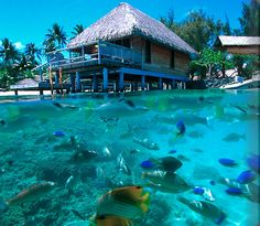 Bora Bora fish :) The diving would be awesome here!!!
