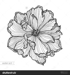 Flower Line Drawings, Flower Sketches, Flower Artwork, Art Drawings Sketches, Drawing Flowers, Animal Drawings, Tatuagem Sak Yant, Arte Grunge, Boutique Logo