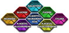 8 Glyconutrients