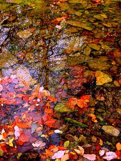 Autumn Belleza Natural, Natural World, Amazing Nature, Autumn Leaves, Mother Nature, Cool Pictures, Scenery, Seasons, Beautiful
