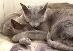 My photography of our 2 cats... - I slept until 8:30am today! It was so weird not to...