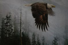 Robert Bateman Majesty On The Wing Bald Eagle Eagle Painting, Limited Edition Prints, Bald Eagle, Art Lessons, Canvas Art, Wings, Bird, Gallery, Artwork
