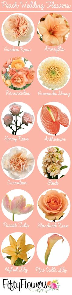 Find the perfect peach flowers for your event at http://FiftyFlowers.com