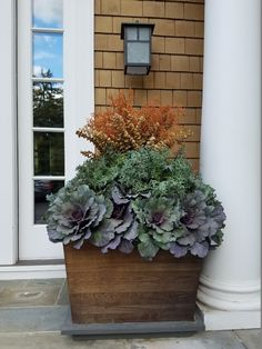 observations of a landscape designer Fall Plants, Green Plants, Porch Plants, Green Landscape, Landscape Design, Container Plants, Container Gardening, Winter Window Boxes, Fall Containers