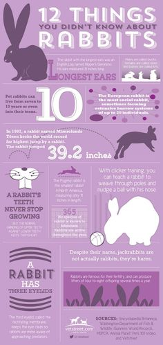 Just in time for Easter, check out vetstreet.com's infographic to learn 12 fun facts about bunnies and rabbits.