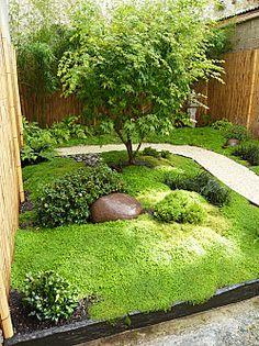 Jardin Japonais. Un peu d'ardoise, des Bambous, un Erable du Japon, de l'Helxine & quelques cailloux...