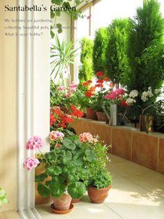 제라늄 키우기 방법 A to Z - <1> 계절별 관리 방법(여름철을 조심하라!) : 네이버 블로그 Indoor Plants, Planters, Mecca Masjid, Home Decor, Gardening, Flowers, Houses, Homemade Home Decor, Garten