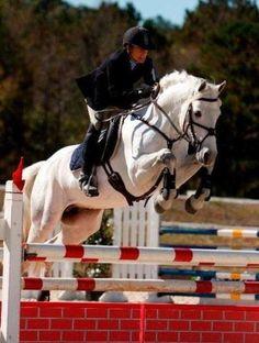 Connemara in alpharetta, ga Events, bold, good gallop. Most Beautiful Horses, All The Pretty Horses, Connemara Pony, Pony Breeds, Horse Shirt, Horse Pictures, Horse Farms, Horse Love, Show Horses