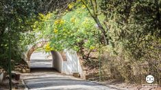 Digital Product Thumbnail - Arch in a Park Under a Bridge with Flowers Blossom in Spring Spring Pictures, Spring Photography, Park Around, Top Travel Destinations, Travel Images, Green Trees, Arch, Bridge, Digital