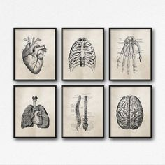 Set of Six Art Prints - Science Anatomy Wall Art, Neutral Tan Brown, Vintage Style, Medical Student Gift, Doctor's Office Decor - SKU:892