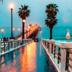 beach, california, and ocean pier boardwalk bridge beaches palm LA Cali oceans lakes water summer vibes good indie hipster vacay vacation evening night lights lamp post wet rain rainy weather road trip day young wild free swim fun friends