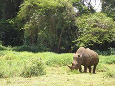 Rhino in Kenya (taken by Sarah Croaker)