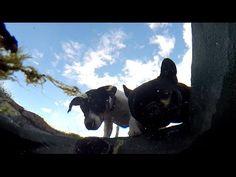 Un paseo con los perros, después a beber en la fuente | videos desde otro punto de vista