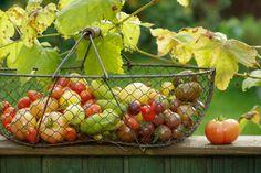 Paradeiser  -  Tomaten